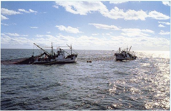 片貝漁港あぐり船イワシ漁