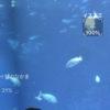 【釣り/アプリ】大洗水族館一押し、AI魚図鑑「LINNE LENS」が使える!