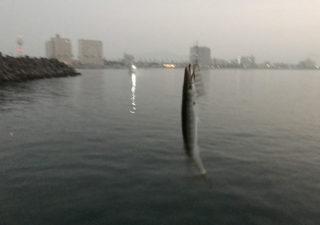 【釣り/勝浦・鴨川】8月・夏の外房で涼しく夜釣り。のはずが、どこもかしこも伊勢海老漁の網ばかり…