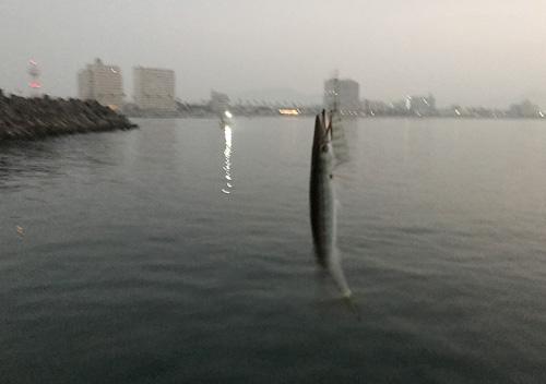 勝浦_鴨川_アジカマス堤防釣り