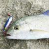 【グアム/釣り】南国の海に30gのメタルジグを投げたらカスミアジが釣れた。