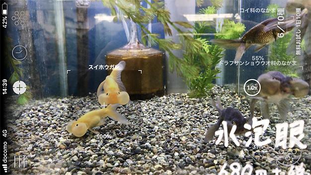 魚認識アプリLINNELENS
