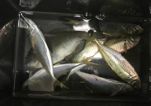 外房_勝浦・鴨川堤防テトラでアジのカゴ釣り