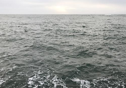 外房_勝浦・鴨川堤防テトラでアジのカゴ釣り釣果ムツ