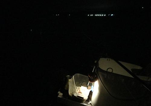 勝浦鴨川でアジ釣り_メッキとメジナの釣果も