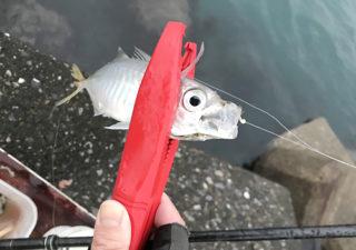 【釣り/アイテム】軽くても硬くてホールド抜群!シマノのフィッシュグリップは評判通り◎。