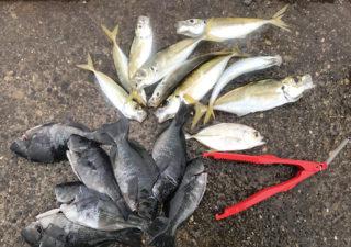 【釣り/勝浦・鴨川】12月・メッキ、アジ、メバル。雨、風、寒波の中よく頑張りました。