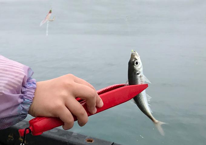 勝浦鴨川3月の釣果釣り場:アジサビキ釣り調理