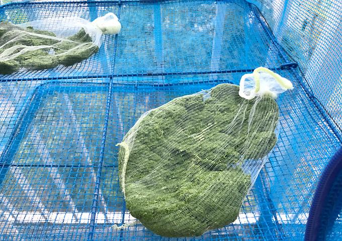 【保存/乾燥】よもぎのペースト白玉粉で蓬餅・レシピ作り方