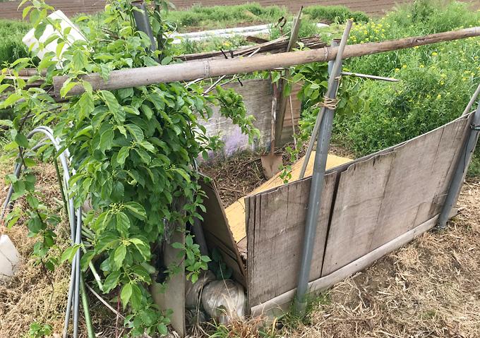 お茶殻を発酵させて堆肥化(有機農法)有効利用【畑のコンポスト】