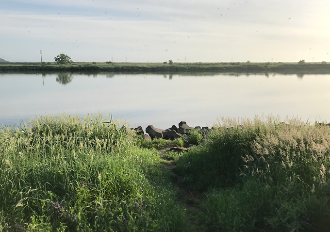 利根川でテナガエビ釣り_5月
