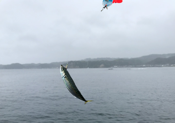 外房(勝浦・鴨川)アジのカゴ釣りとショアジギング