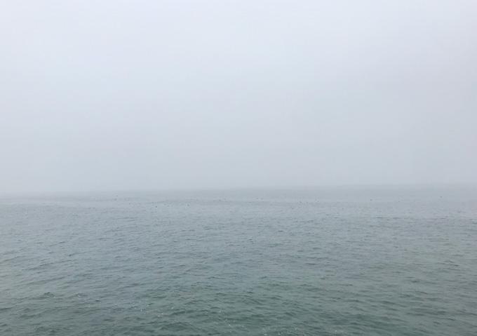 【ショアジギング】イワシ接岸に鳥山!九十九里に青物がやってくる
