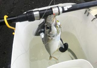 【釣り/勝浦・鴨川】7月・梅雨のアジ釣り。それでも海の気配は夏近し!
