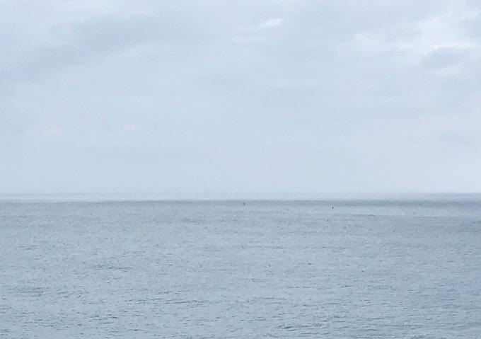 【九十九里/7月】釣果:サバとヒラメ