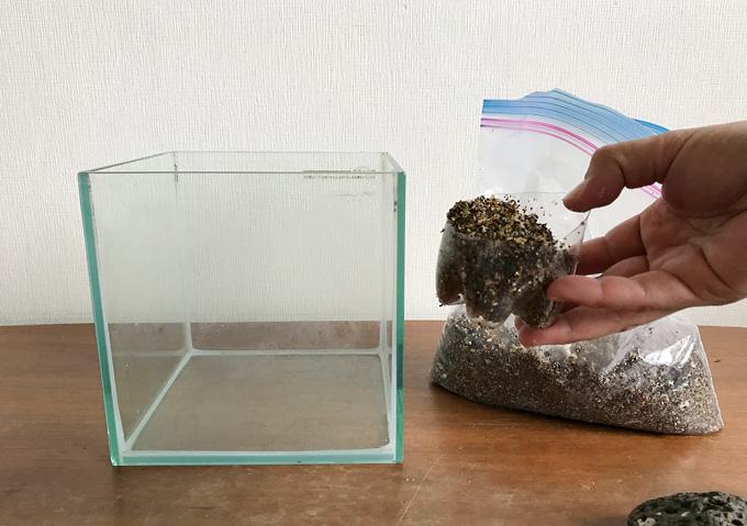 【磯遊び】イソガニの水槽を砂と岩でレイアウト。飼育方法と道具(人口海水)
