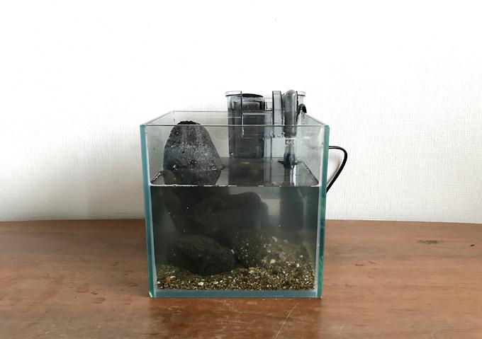 【磯遊び】イソガニの水槽。飼育方法と道具(人口海水)
