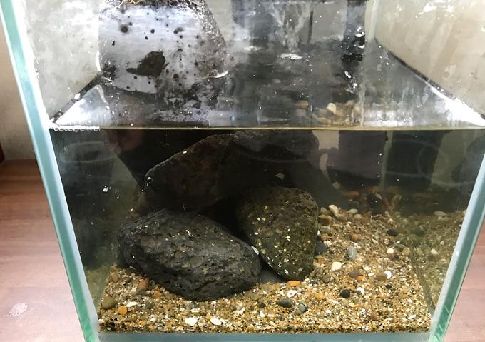 【磯遊び】イソガニの水槽。飼育方法と道具。人口海水、岩で水槽レイアウト