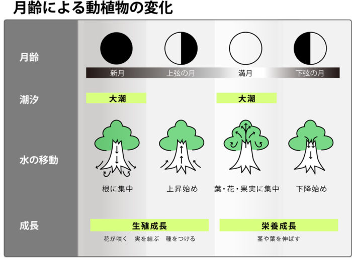 月齢と農業 種蒔き・収穫の適期