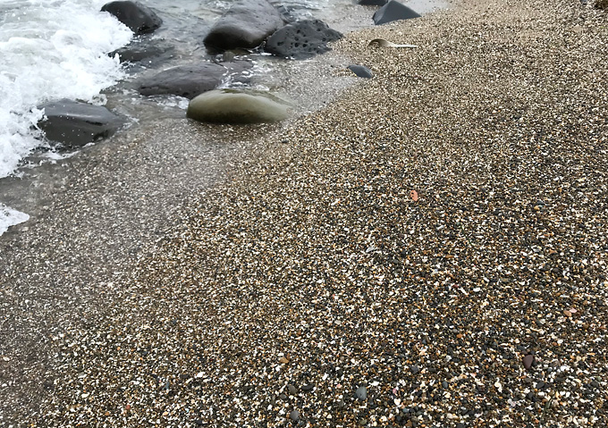 銚子漁港でイワシ釣り:釣果(夏8月)