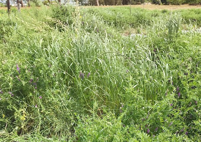月齢と農業 草刈り 適期/いつ?