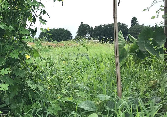 夏の草刈り_自然栽培で行こう