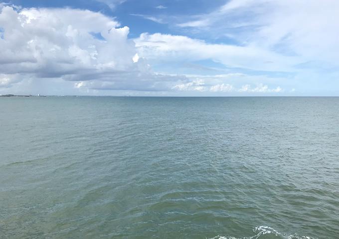 九十九里の海はスナメリイルカ/釣れない