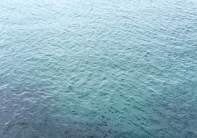外房の磯(9月)アジ釣り