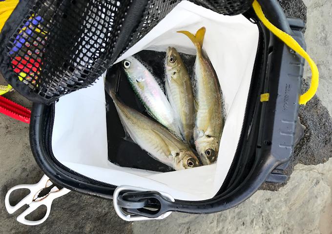 【釣り/磯水汲みバケツ】ダイワ蓋網付き/カゴ釣りの釣果(アジ)