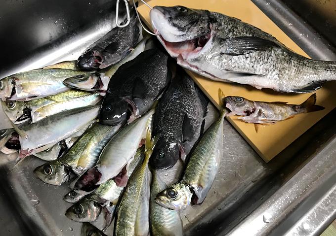 【外房/釣り】釣果・勝浦鴨川の海釣り