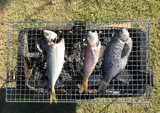 【炭火焼/釣り】釣った魚でBBQ(アジ・ムツ・メジナ)