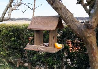 【DIY/鳥餌台】覚えたての算数を使って工作に挑戦!庭に野鳥を呼んで自然観察