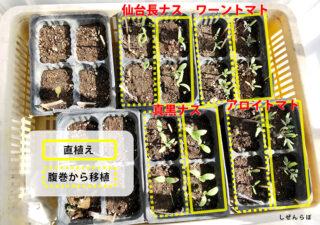 【育苗/トマト・ナス】《2.観察結果編》簡易温室の発芽率を比較!腹巻・湯船・プラスチックケース。