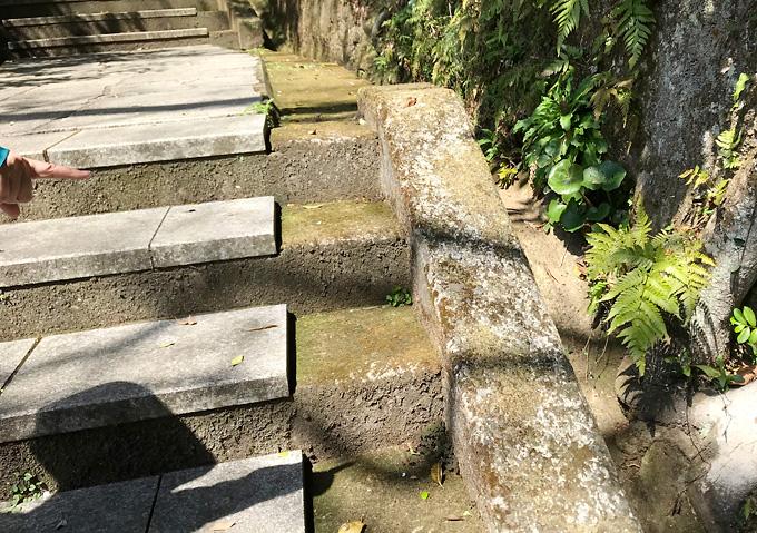 シダじゃんけんとは(鋸山登山/野あそび)