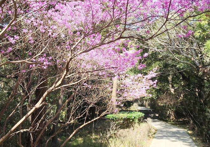 【鋸山登山/花】森林浴ルート案内