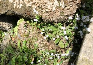 【鋸山/南房総】登山中に見られる、山野草・花