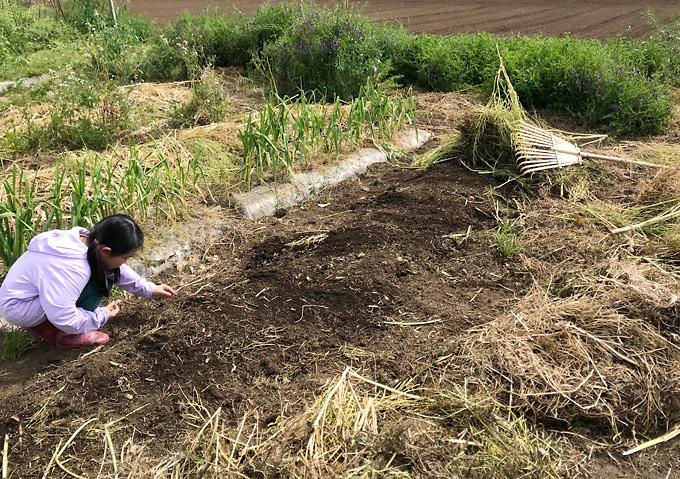 【トマト/畝作り】草刈りから透明マルチの堆肥満載の高畝作り(アロイトマトとワーントマト)