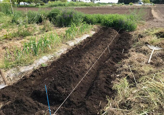 【トマト/畝作り】草刈りから透明マルチの堆肥満載の高畝作り/アロイトマト(F1桃太郎)