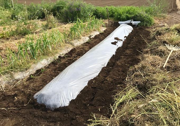 【トマト/畝作り】草刈りから透明マルチの有機堆肥満載の高畝作り/アロイトマト(F1桃太郎)