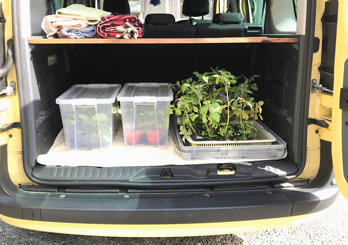 【寝かせ植えトマト栽培(植付け)】ベランダ育苗/アロイトマトとワーントマト