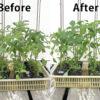 【育苗/簡易温室】発芽から植付け。アロイトマトとワーントマト。
