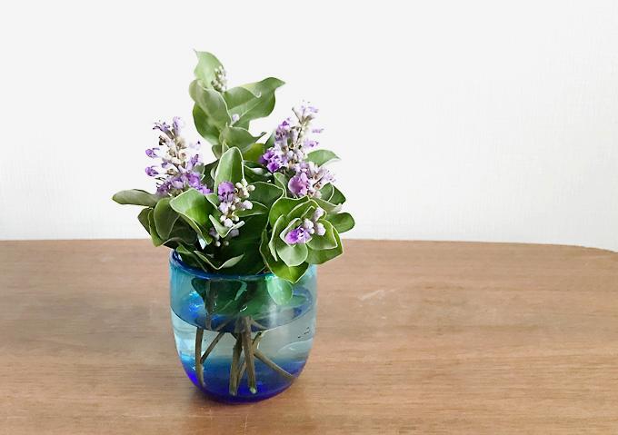 浜に咲く紫色の花ハマゴウ。切り花・生け花
