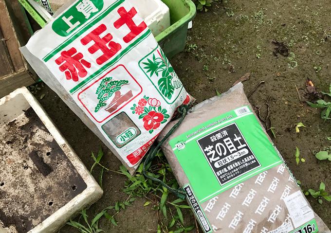 【芝の種まき方法】培養土・タキイのバミューダグラスを種まき