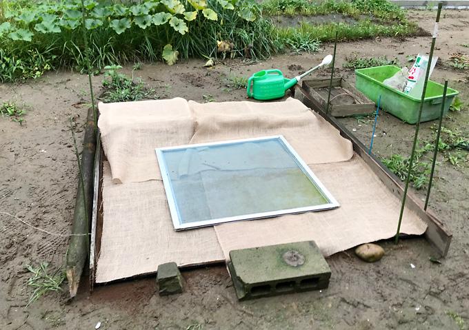 【庭芝の種まき方法】道具・タキイのバミューダグラス(西洋芝)稲用パレット栽培(保湿)