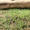 【DIY/庭芝】芝は自分で種まき。「種類も選べ」て「コスパ」が良いのが利点。