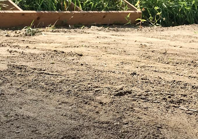 【DIY道具】庭芝直播栽培・タキイのバミューダグラス(西洋芝)