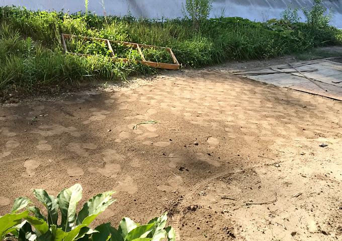 【自分で芝を張る!】庭芝直播栽培・タキイのバミューダグラス(西洋芝)