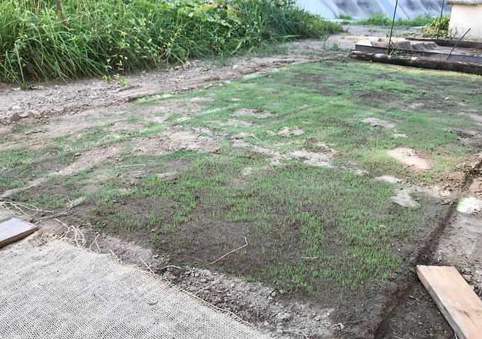 【簡単芝張り】種まき方法_発芽まで保湿_西洋芝バミューダグラス