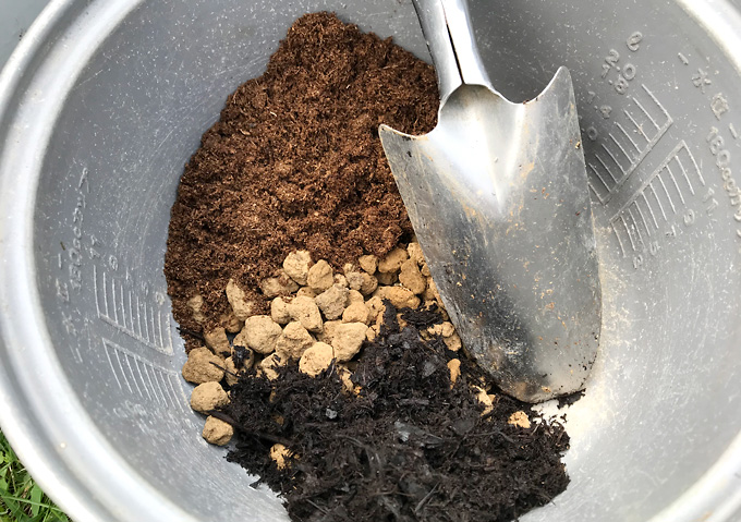 【鉢植え/培養土(割合)】挿し木の移植(ハマゴウ・沈丁花・キンモクセイ)