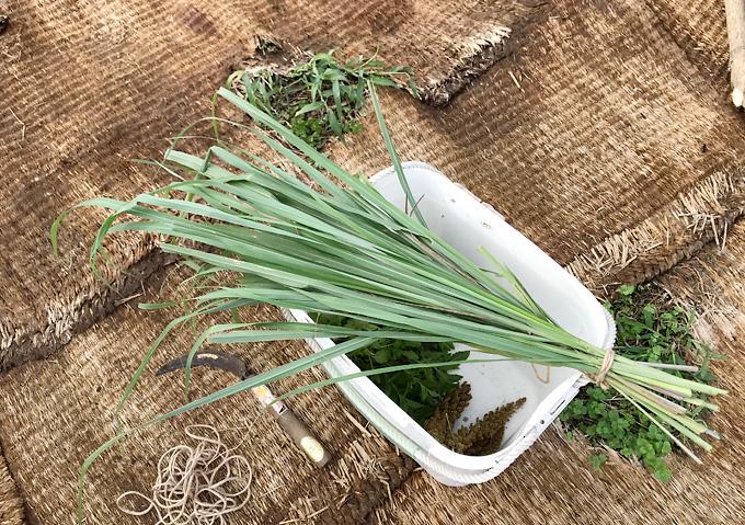 【手作りハーブティ/レモングラス】家庭菜園の有機栽培ハーブの活用